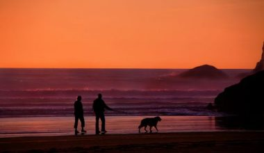 An elderly couple walking their dog by the sea with the sun setting