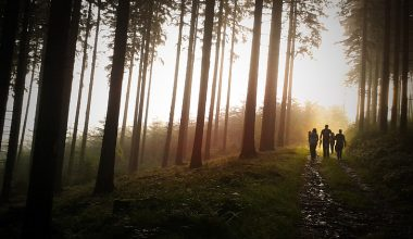 A family walking up a path in a forrest