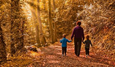 mother an sons walking through a forest with the sun shining through