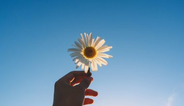 Blue sky background with flower in hand