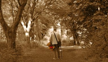 A person with a cane walking up a dirt path with trees on either side