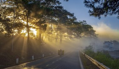Misty road with sun rising through the trees