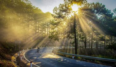 A person riding a motorbike on a twisty lane with the sun rise shining through the trees behind