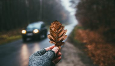 A person holding an autumn leaf with a car in the background